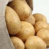 供应批发 原生态绿色土豆