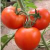 供应西红柿硬粉