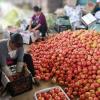 供应 冬季蔬菜西红柿 番茄 硬粉番茄