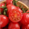 供应 正宗海南樱桃小番茄圣女果西红柿新鲜甜水果
