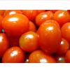优质小番茄量供应