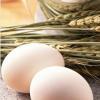 湖南省福鹅产业开发鹅蛋