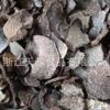 源头厂家供应野生块菌批发松露干货野生菌土特产礼品