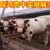 优质肉牛小牛犊全国包送 供应小鲁西黄牛 现在肉牛牛犊价格