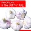 大量供应大蒜之乡金乡大蒜山东土特产 出口级紫皮蒜代加工代存代