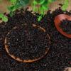 黑米杂粮 东北黑米煲粥粗粮 袋装黑香米五谷杂粮 可一件代发