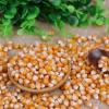 现货批发爆花专用球形玉米粒 新鲜爆球玉米五谷杂粮 球形玉米