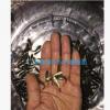 鱼苗批发 鲤鱼苗大量供应 淡水鱼类种苗批发