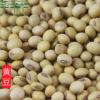 批发精选大豆原产地供应黄豆 豆浆原料专用五谷杂粮袋装
