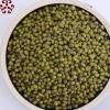 东北特产五谷杂粮磨粉绿豆 豆浆原料批发散装绿豆厂家直销