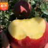 大沙河现采现摘新鲜冰糖心苹果8斤装 红富士基地产地直供水果批发