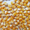 新疆康龙粮油玉米粒 厂家直销玉米粒 出售大量玉米粒 量大从优