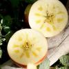 新疆阿克苏冰糖心苹果10斤装新鲜当季水果红富士红旗坡丑苹果ZX