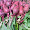新鲜红皮萝卜农家蔬菜现拔现发辣脆红皮白心萝卜做泡菜炒菜5斤