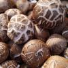 特产干香菇 冬菇碎片大片干货 散装食用菌批发500克