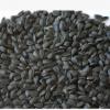 厂家直销 油葵 可榨油可炒 含油量高新疆阿勒泰地区德聚仁合