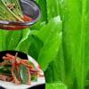1斤装包邮 新鲜大香菜先挖香菜芫荽菜缅甸调料香菜时令蔬菜野生