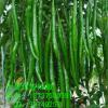 新鲜辛辣蔬菜 青椒出售 健康营养无公害食品厂家大量批