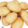 厂家直销 保鲜土豆 红皮黄心小土豆 新鲜蔬菜供应 欢迎咨询