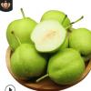 陕西早酥梨5斤装新鲜当季早熟多汁绿皮梨水果薄皮脆皮梨子包邮