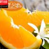 江西新鲜夏橙赣南橙子 现摘降火多维C赣州脐橙 20斤装厂家批发