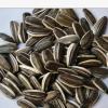 无添加剂的高品质出口级别甘肃葵花籽(24/64)