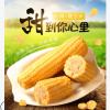 山西临汾玉米棒新鲜糯玉米非转基因真空包邮一件代发香糯玉米10