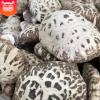 一级花菇香菇干散装 天然泌阳原生态花菇 食用菌香菇干产地直销