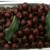 基地批发黑珍珠大樱桃树 樱桃树当年结果 黑珍珠大樱桃树多少钱