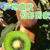 产地直发陕西水果眉县特产 香甜大颗饱满水果多汁猕猴桃
