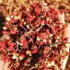 特级 韩城大红袍花椒 农家自产 批发零售 花椒批发 产地直销