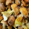 【裕菌隆】 姬松茸 干姬松茸 巴西菇批发 干姬松茸 松茸 品质保证