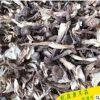鹿茸菇干菌山珍干食用菌