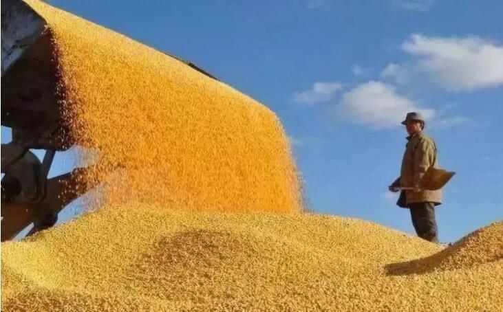 粮食战争早已开始,我们却没有能发芽的种子