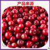 蔓越莓果粉 固体饮料添加原料 蔓越莓速溶粉