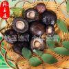 剪脚香菇3.5cm 天然无硫椴木金钱菇 冬菇食用菌散装香菇