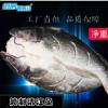 特价烤鱼店烧烤店用野生冷冻腌制开背清江鱼黑鮰鱼净重2.5-3.0斤