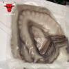 澳大利亚八爪鱼 海鲜水产 八爪鱼 冷冻八爪鱼 自助餐餐厅常年供应