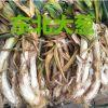 东北特产土大葱新鲜老品种家乡味人工除草保证无农药化肥