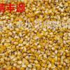厂家批发玉米种子 五谷杂粮玉米 猪牛羊鸡饲料玉米 量大从优