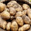 农家新鲜沙土豆甘肃蔬菜高山马铃薯烧烤粉洋芋4斤包邮拍下送一斤