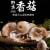 精选野生环境香菇原产地直批食用菌香菇云南特产香菇菌大量批发