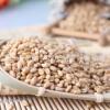 厂家直销批发五谷杂粮小麦 合作社直销小麦 富硒小麦