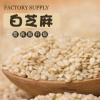 厂家供应熟白芝麻 榨油芝麻免淘洗高出油五谷杂粮油麻杂粮供应