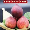 现摘陕西水蜜桃3斤脆甜中大果应季新鲜水果桃子大毛桃血桃10J