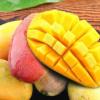 海南贵妃芒果红金龙小贵妃芒果应季热带新鲜水果一整箱非台农